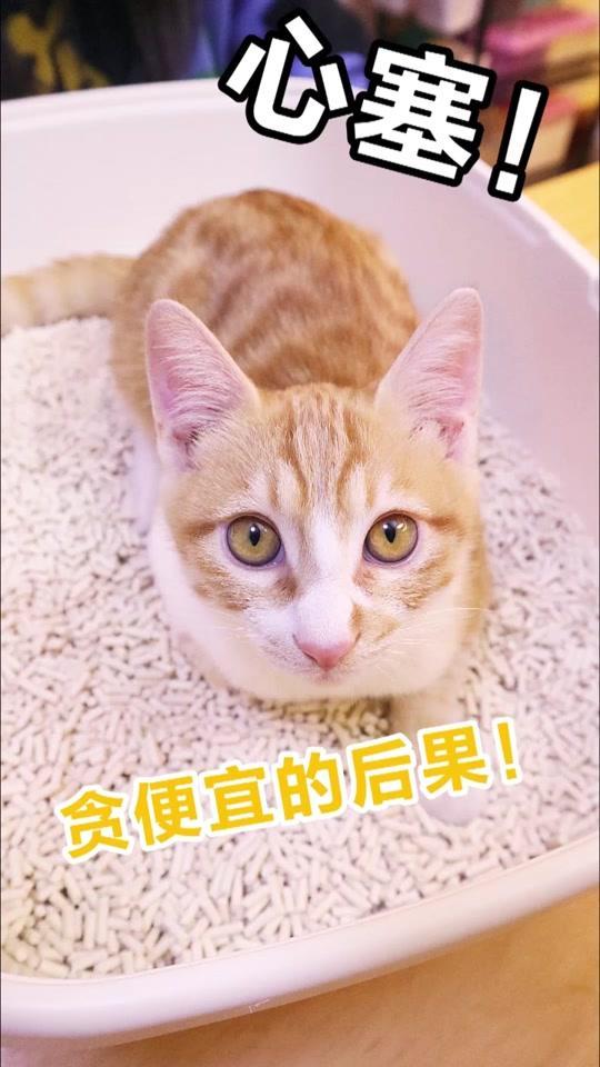 发现喵食堂卫可宠乐消毒粉幼猫猫舍搞定猫癣真菌原美国杜邦卫可