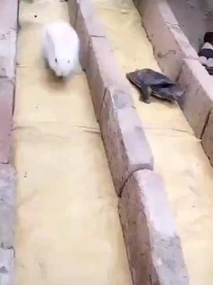 hayoou video
