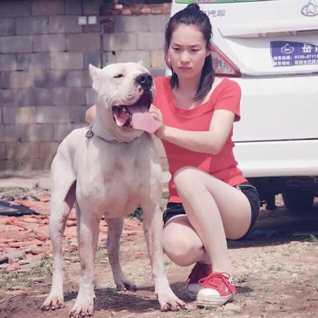 养猛犬女汉子🌹🌹刘思