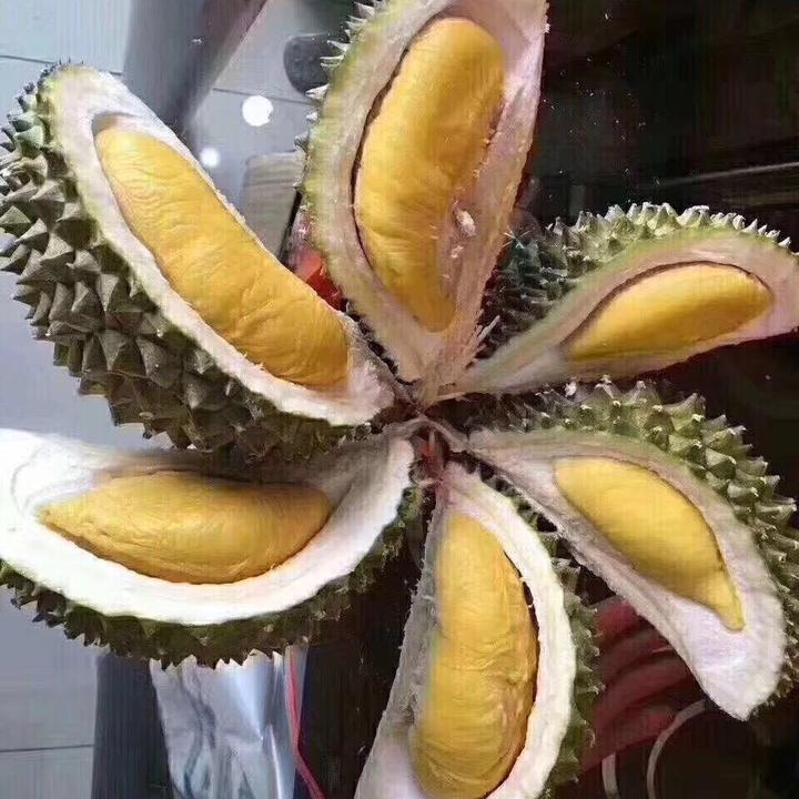 本鲜东南亚水果种植果园