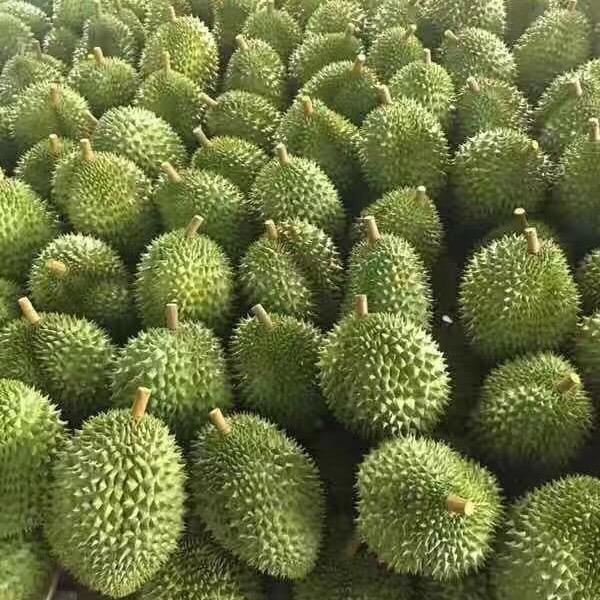 荣多威水果果蔬产业园